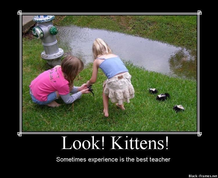 look-kittens-sometimes-experience-is-the-best-teacher